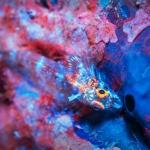 Fluo Diving