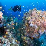 Coral Block