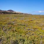 Fuerte Landscape