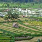 Bali Impressions