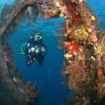 Japanese Wreck