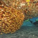 Schooling Fish