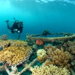 Reefprojekt Pondok Sari