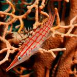 Red Sea Underwater
