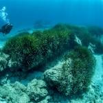 Underwater life Cyprus