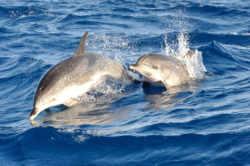 ber001595_delfin_dsc_9904