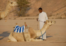 inf000075_013-red_sea_camel_tour_-_guenter_schindlmaier
