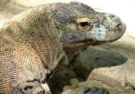 ber001664_reptile-park-by-j.-bleys