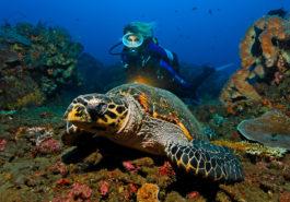 Taucher, Unterwasserlandschaft, Schildkröte