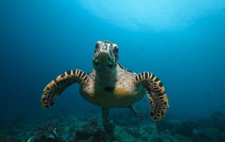7 Tage Special Trip Gaafu Alifu Atoll 2018