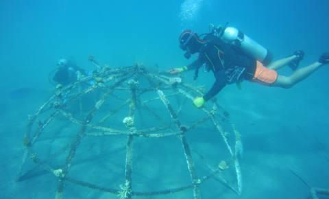 Reinigungsaktion Korallenprojekt