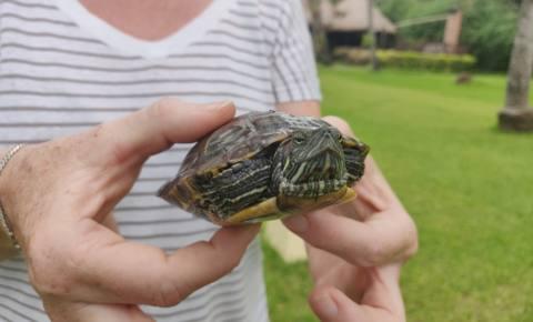 Es regnet … Schildkröten???