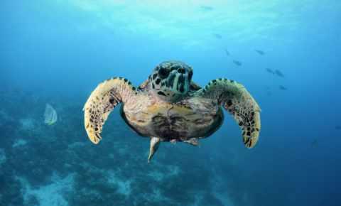 Schildkröte posiert für den Fotografen
