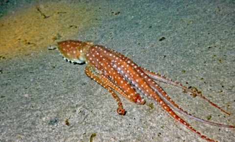 Squids – Who is who?