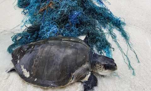Schildkrötenrettung