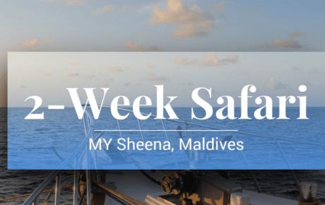 2 Wochen Safari 2020