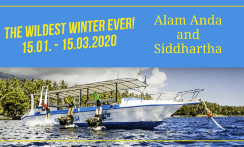 The hottest winter ever – awesome rates available in Siddhartha and Alam Anda – 2020