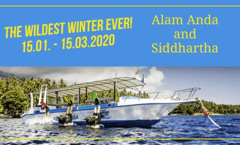 Der heißeste Winter aller Zeiten – Hammerpreise im Siddhartha und im Alam Anda – 2020
