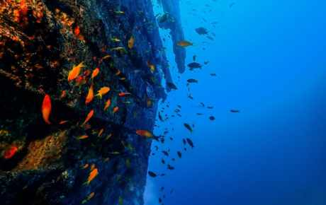 Our Wrecks on the house reef