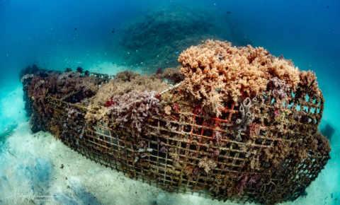 Riffprojekt Pemuteran: Öko-Aktivität unter Wasser!