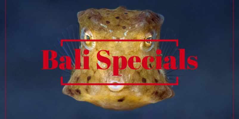Bali Specials