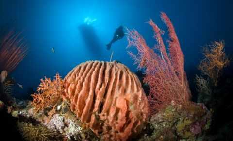 Eine spezielle Unterwasser-Aufnahme