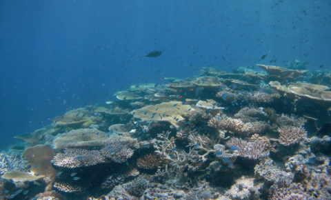 Healthy coral life